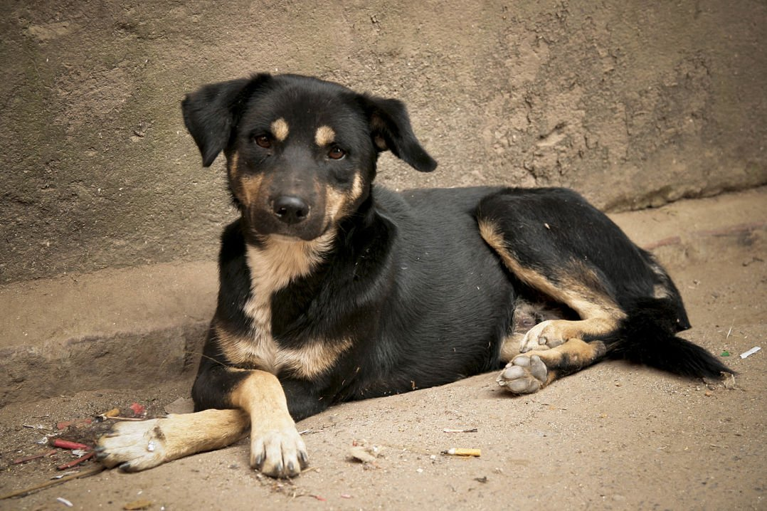 image gallery rescuedogs