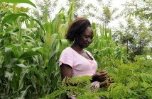 Food Production in Liberia