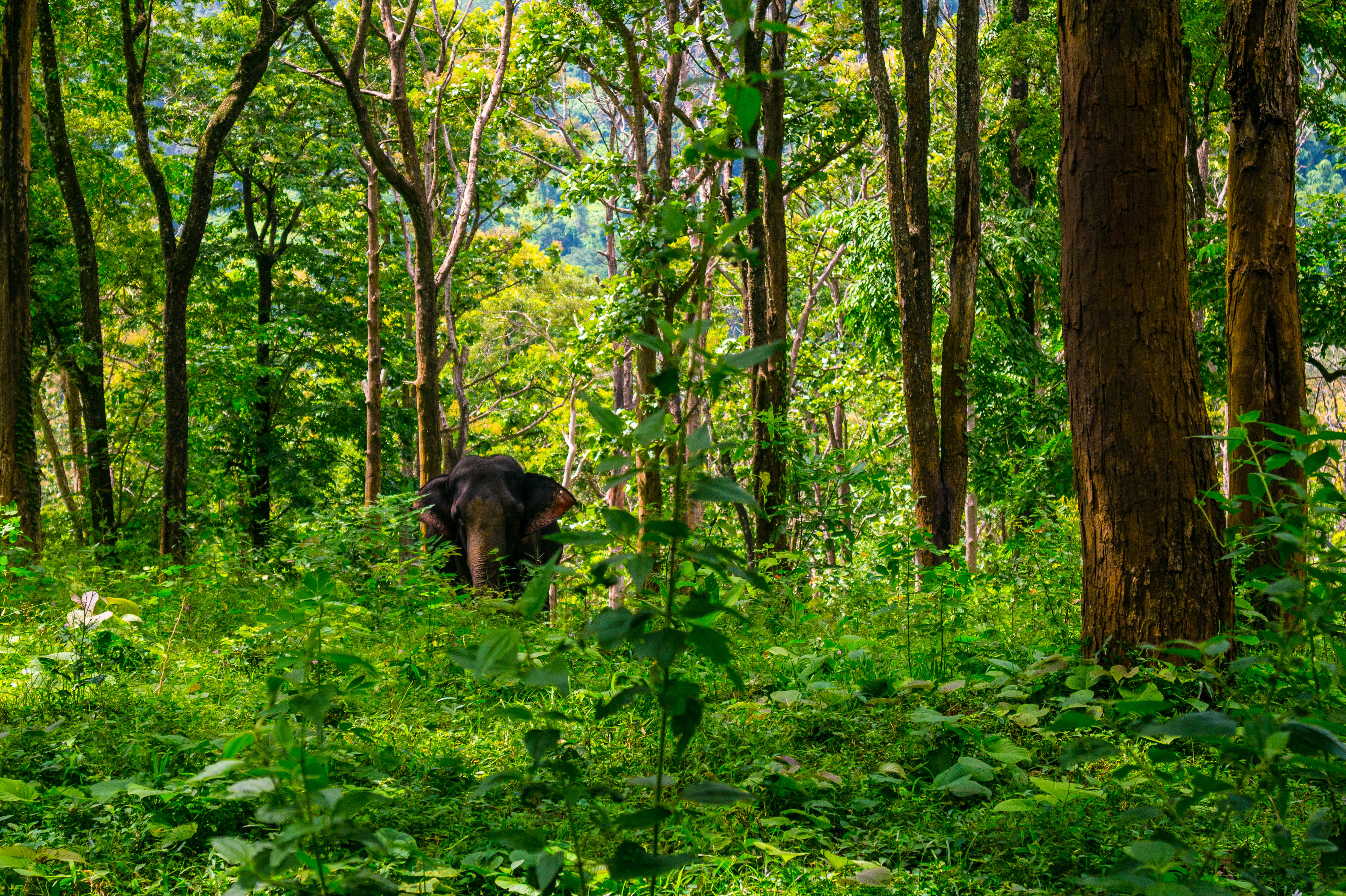 the wealth of forests The wealth of forests : markets, regulation, and sustainable forestry [chris tollefson] -- the wealth of forests is a pioneering attempt to grapple with the policy implications of the transition to sustainable forestry.