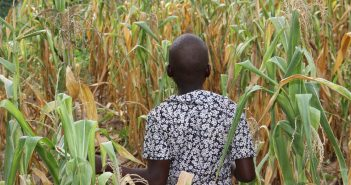 Understanding Population Growth and Fertilizer Use in West Africa
