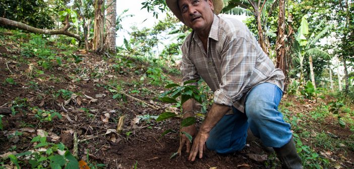 Sustainable Agriculture in Nicaragua