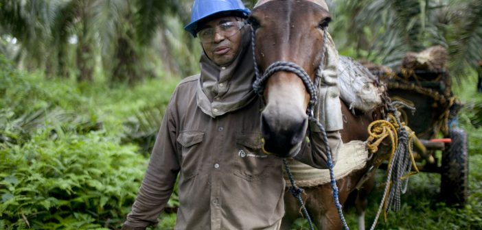 Sustainable Agriculture in Colombia: Three Current Projects