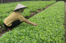 Sustainable Agriculture in Vietnam