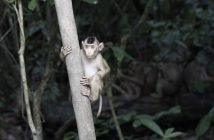 Drones Track Monkeys in Malaysia