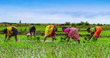 Solving the Global Hunger Crisis