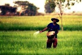 Nitrogen fertilizer