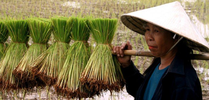 Rice-Pledging