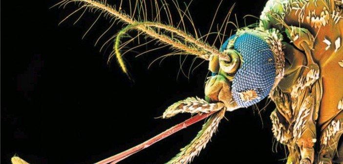 dengue fever in brazil