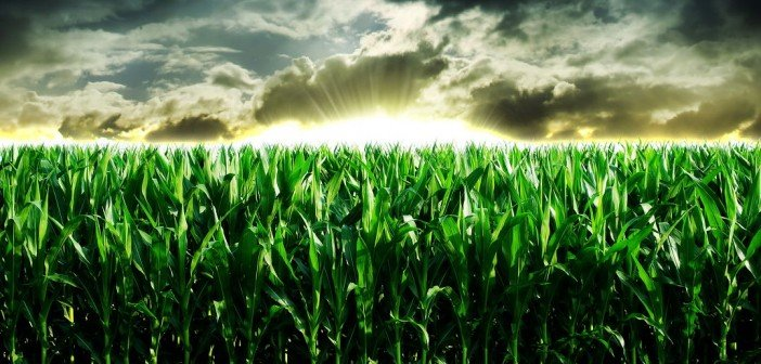 food aid and climate change