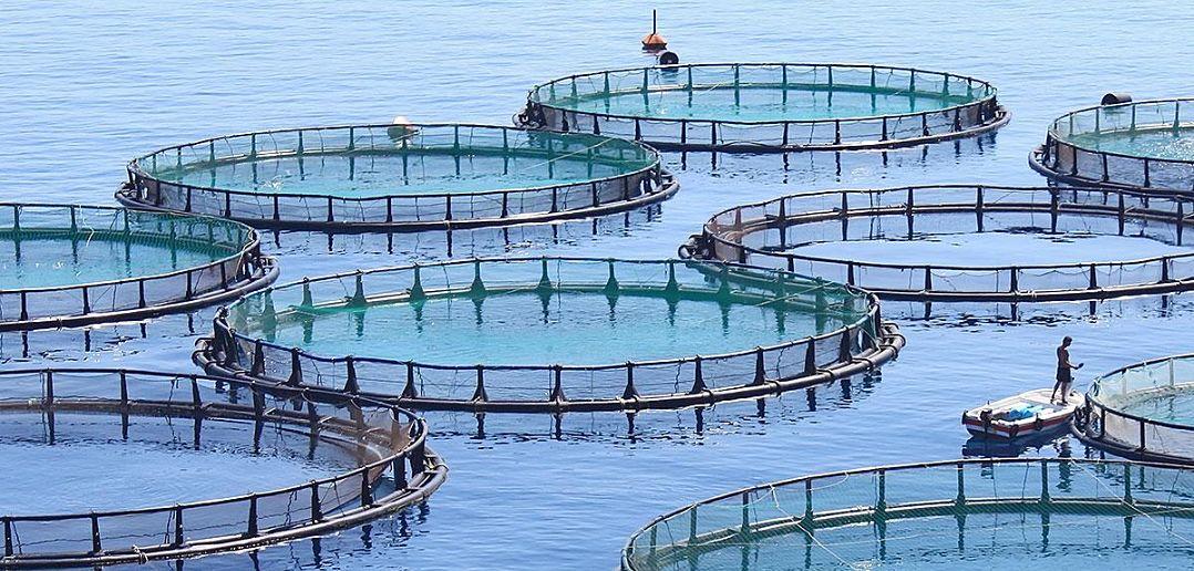 Aquaculture: Fish Farming Fights Poverty - BORGEN