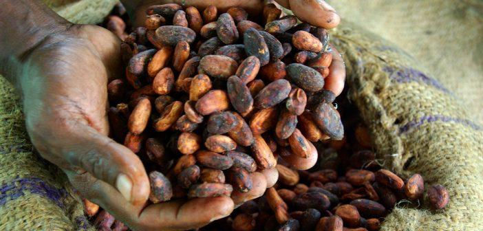Cocoa Farming_Africa