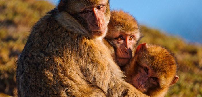 Zika Vaccine Proven_Monkeys