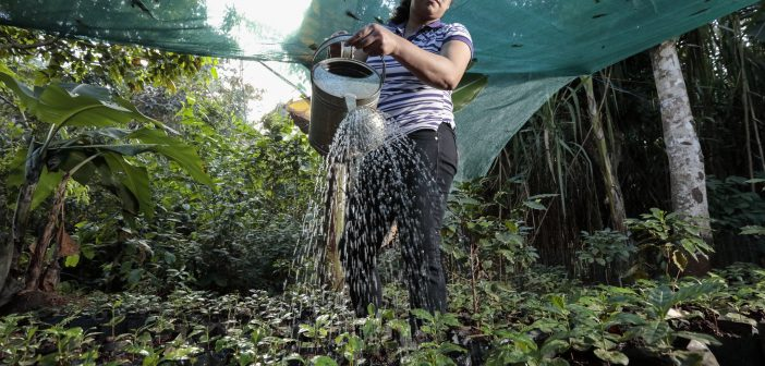 ANEI: Fair Trade Coffee Cooperative