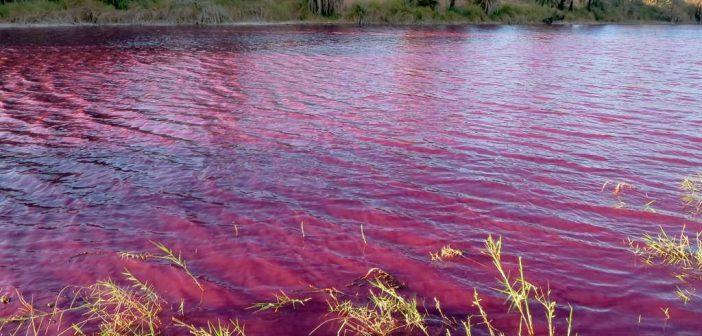 Lake Chad Basin Crisis