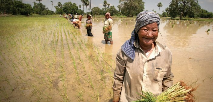 Causes of Poverty in Cambodia: Maintaining Growth