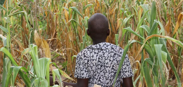 Fertilizer Use in West Africa