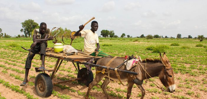 Sustainable Agriculture in Senegal