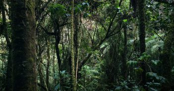Protecting Rainforests Using Old Cell Phones