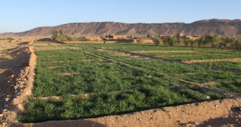 sustainable agriculture in morocco