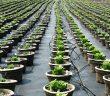 Urban Underground Farming Solution