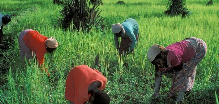Small Farmers in West Africa