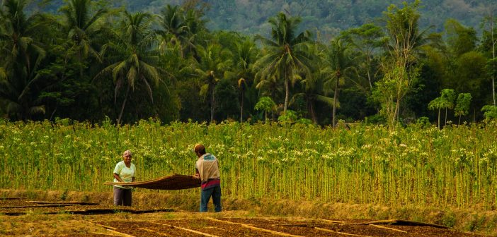 Solutions to Child Labor in Brazil and the Tobacco Industry