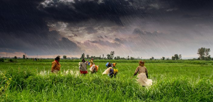 Rice Production in Tanzania