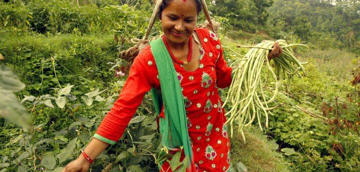Female Farmers in Nepal