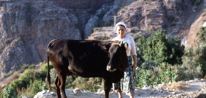 COVID-19 in Turkey