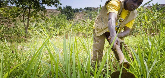 Emergency Food Security Program