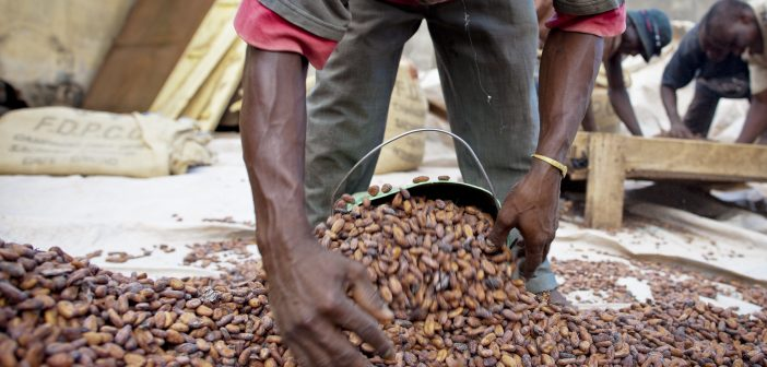 Fairtrade is Helping Producers During COVID-19