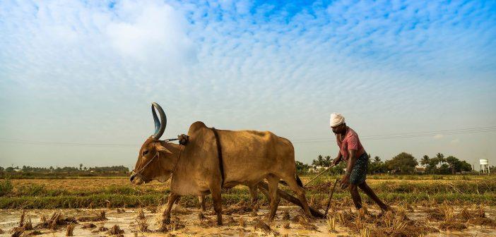Billionaire's Lower-Cost Fertilizer