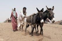 Sudan amid COVID-19