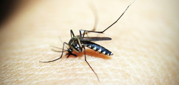 Dengue in the Philippines