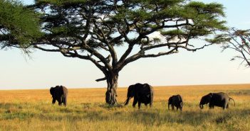 How Africa's tourism industry is combatting the COVID-19 economy