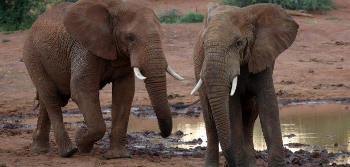 Wildlife Poaching in Africa