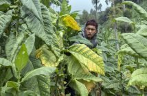 social forestry in Indonesia