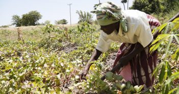 TechnoServe, technology to eliminate global poverty