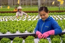 Iot-Based Smart Agriculture