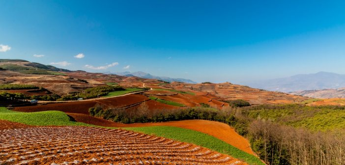 Starbucks' Farming Centers in Yunnan