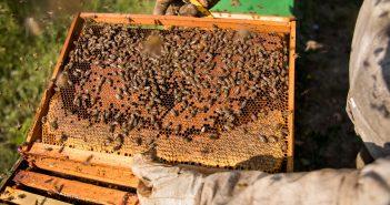 Beekeeping in Costa Rica