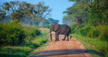 Revitalizing Plant and Animal Biodiversity in Uganda