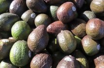 Sustainable Avocado Farming in Mexico