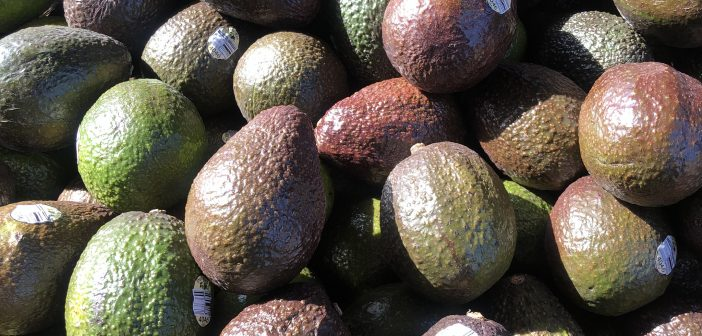 Sustainable Avocado Farming in Mexico