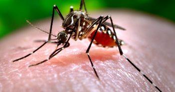 Mosquito-Borne Diseases in Low-Income Communities