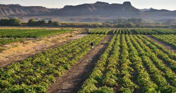 SupPlant: Supplying the World's Poor