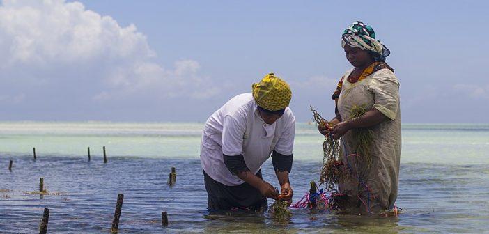 Seaweed Farming in Africa
