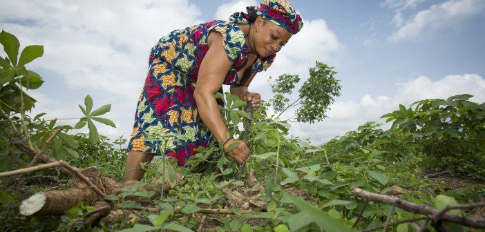 Nigerian smallholder farmers