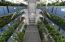 Spaceborne Crops Can Address Global Food Insecurity