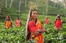 Startups Changing the Tea Industry and Wage Gaps